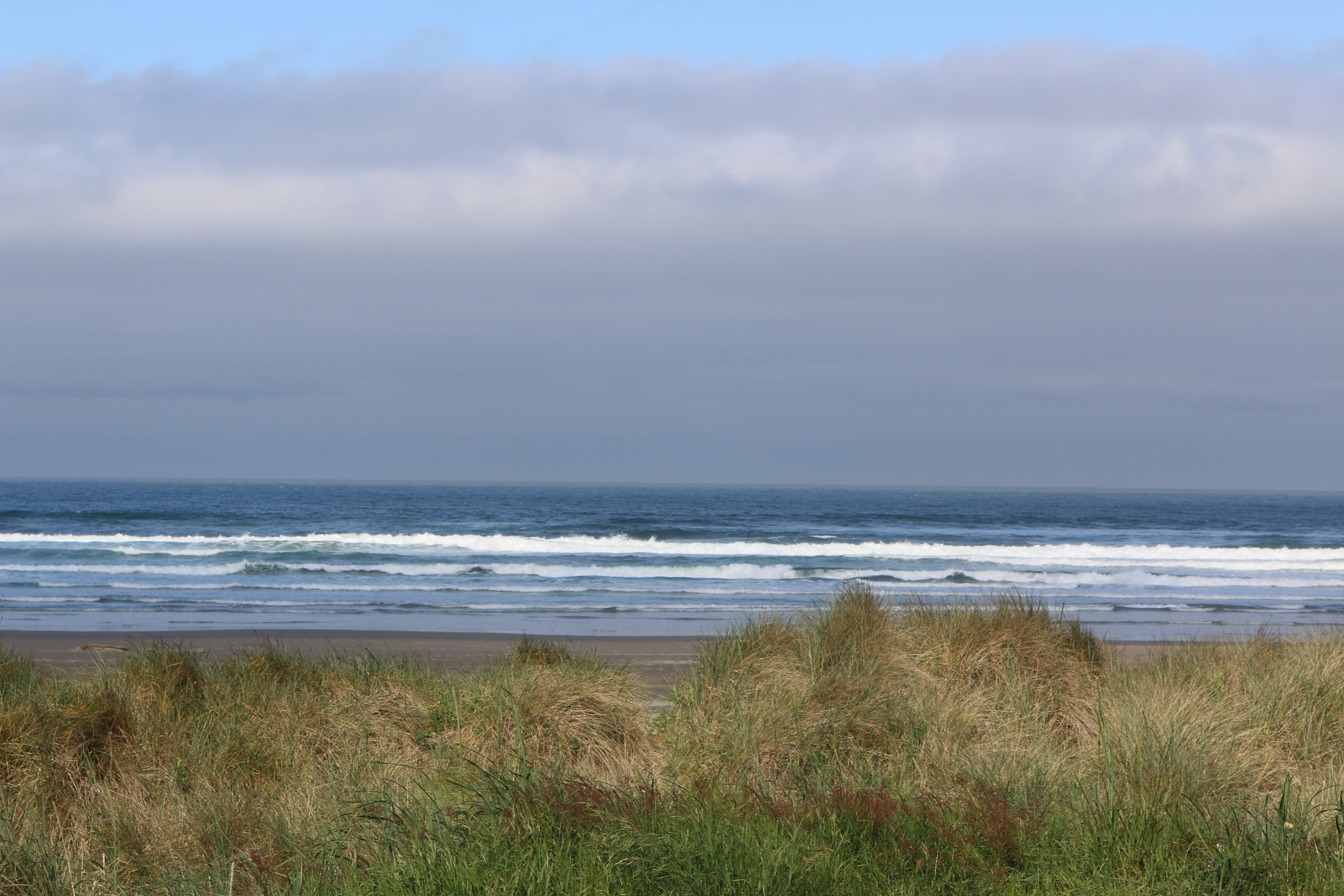 The Pacific ocean with beach grass in the foreground.