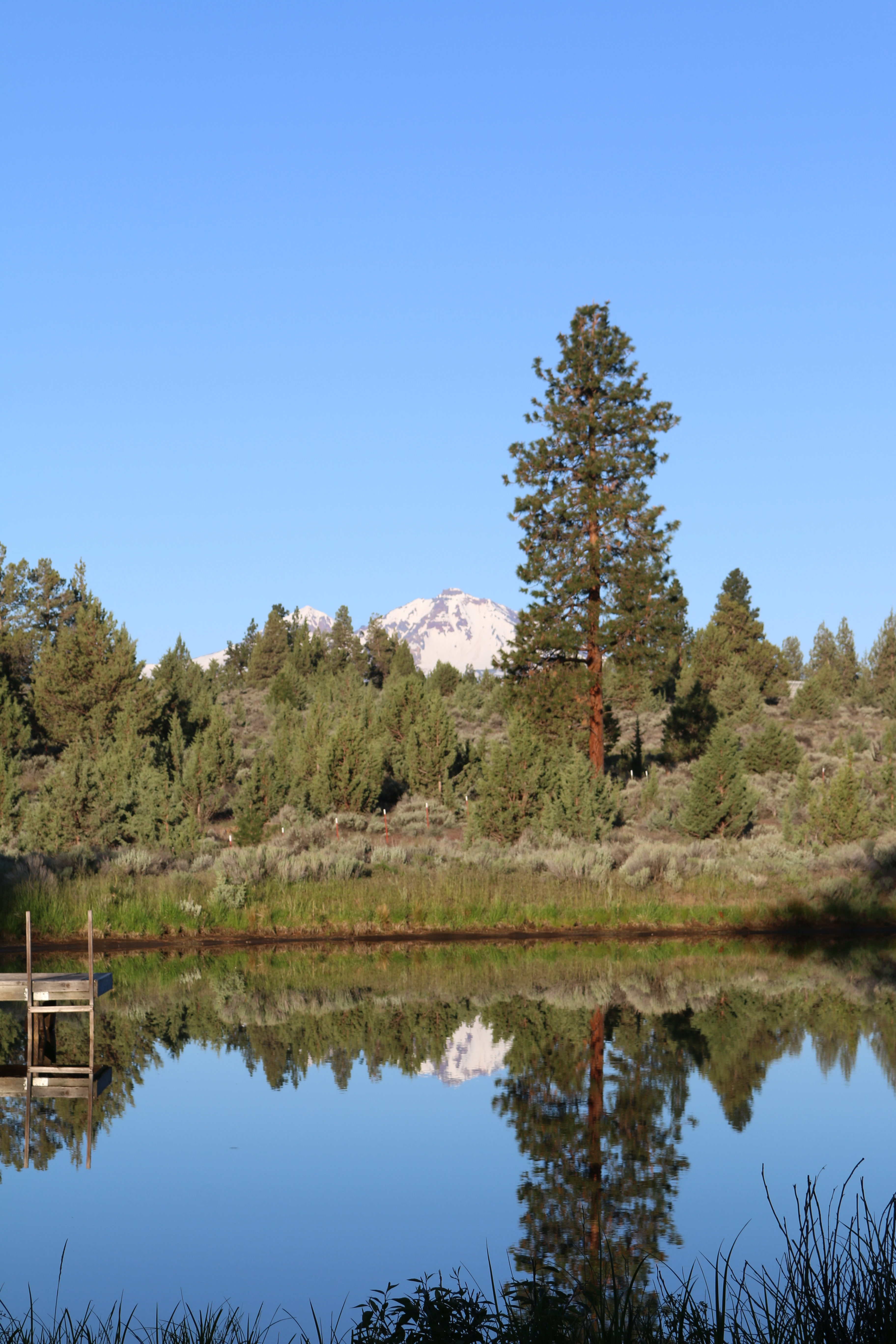 A mountain behind a forest, both reflected in a lake.